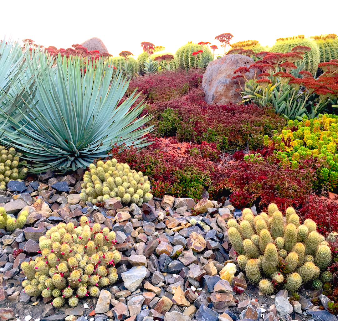 Tips To Bring Color To Your Desert Landscape