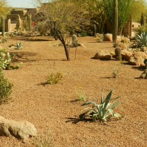 Desert Landscape Transformation