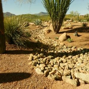 Desert Landscape Transformation